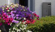 plantenbak_seizoensbeplanting_kleur_eenjarige