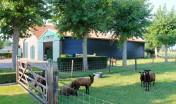 landelijke tuin_zevenbergen_groot gazon_hagen_ruimtelijk_tuinontwerp_tuinaanleg_geleijns hoveniers_boerenschuur_gebakken klinkers_parkeren_leibomen_gebakken klinkers_klein vee_schapen